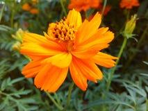 De aardelach in bloemen De bloemen zijn de zoetste ooit gemaakte dingengod en vergeten om een ziel into_ te zetten Stock Fotografie