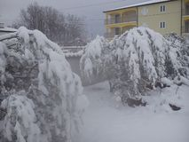 De aardigste winter Stock Foto's