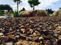 De Aardlandschap van Arizona anderen Stock Afbeeldingen