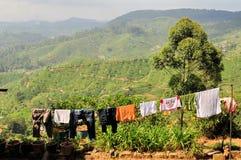De aardlandschap van de theeaanplanting in Sri Lanka Stock Foto
