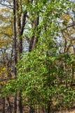 De aardpark van Martin in de herfst royalty-vrije stock foto