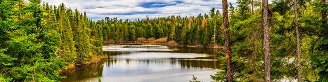 De Aardpark van de molenkreek, de Lentekleuren in Grotere Moncton, New Brunswick, Canada royalty-vrije stock foto's