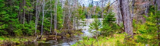 De Aardpark van de molenkreek, de Lentekleuren in Grotere Moncton, New Brunswick, Canada royalty-vrije stock fotografie