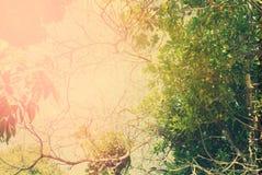 De Aardsamenvatting van de zomer Wilde Tropische Bomen Stock Foto's