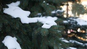 De aardsneeuw van de de winterspar op de takken van net landschap Royalty-vrije Stock Foto