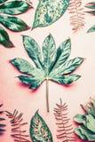 De aardvlakte legt met tropische installaties en bladeren op pastelkleur roze achtergrond royalty-vrije stock afbeelding