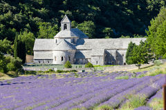 De abdij van Senanque, de Provence Stock Afbeelding