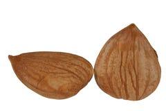 De abrikoos van de pit royalty-vrije stock afbeelding