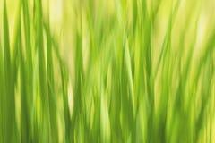 De abstract groen natuurlijke achtergrond van het Bluredgras, ecologisch en h Royalty-vrije Stock Fotografie