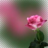 De abstracte achtergrond met roze nam voor ontwerp toe Stock Foto's