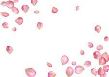 De abstracte achtergrond met roze vliegen nam bloemblaadjes toe Stock Afbeeldingen