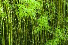 De abstracte achtergrond van bamboespruiten Royalty-vrije Stock Foto's