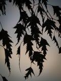 De Abstracte Achtergrond van berkbladeren Stock Afbeelding