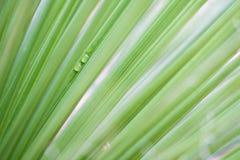 De abstracte Achtergrond van de Groene Installatie Royalty-vrije Stock Fotografie