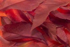 De abstracte achtergrond van de herfstbladeren Stock Foto's