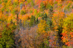 De abstracte achtergrond van de herfstbladeren Stock Afbeelding