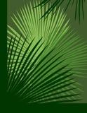 De Abstracte Achtergrond van de palm