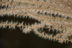 De abstracte achtergrond van graszaden Royalty-vrije Stock Foto's