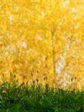 De abstracte achtergrond van het gras Stock Foto's