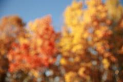 De abstracte achtergrond van het de herfst bosonduidelijke beeld royalty-vrije stock afbeeldingen