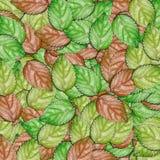 De abstracte achtergrond van textuurbladeren Stock Fotografie