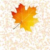 De abstracte achtergronden van het de herfstblad plus EPS10 Royalty-vrije Stock Fotografie