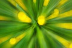 De abstracte bloem van de bloei gele paardebloem van boom in platteland Gecreeerd door uit te zoemen terwijl sluitend blind De sn stock afbeeldingen