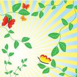 De abstracte bloemenachtergrond. Royalty-vrije Stock Foto's