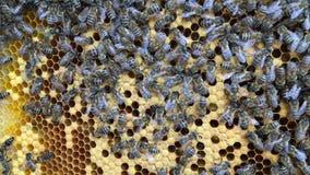 De abstracte die hexagon structuur is honingraat van bijenbijenkorf met gouden honing wordt gevuld stock footage