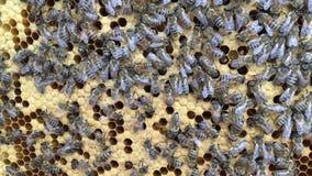 De abstracte die hexagon structuur is honingraat van bijenbijenkorf met gouden honing wordt gevuld stock video