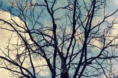 De abstracte droge naakte achtergrond van de boomtak stock afbeelding