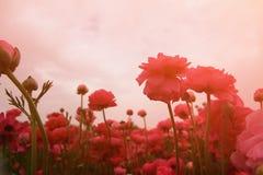 De abstracte en dromerige foto met lage hoek van de lentebloemen tegen hemel met licht barstte gefiltreerd en gestemde wijnoogst Stock Foto