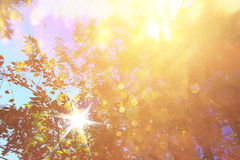 De abstracte foto van lichte uitbarsting onder bomen en schittert bokeh lichtenbeeld is vaag en gefiltreerd Royalty-vrije Stock Afbeelding