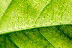 De abstracte, Groene donkergroene achtergrond van de bladaard Royalty-vrije Stock Foto's