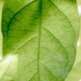 De abstracte, Groene donkergroene achtergrond van de bladaard Stock Fotografie