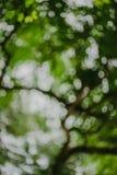 De abstracte, Groene donkergroene achtergrond van de bladaard Stock Afbeelding