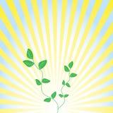 De abstracte heldere zon als achtergrond. Stock Afbeelding