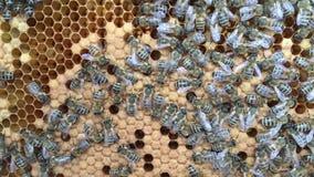 De abstracte hexagon structuur is honingraat van bijenbijenkorf die met gouden honing wordt gevuld stock videobeelden