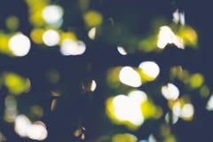De abstracte natuurlijke onduidelijk beeldachtergrond, defocused bladeren, bokeh Royalty-vrije Stock Afbeeldingen