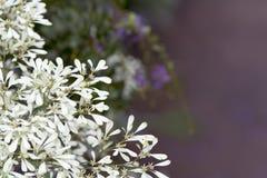 De abstracte tekstvakje bloemen van Pascuita Stock Foto's