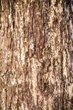 De abstracte Texturen van de Boomschors in het bos Stock Afbeelding