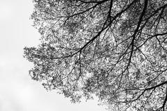 De abstracte textuur van de aardboom