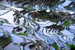 De abstracte textuur van rijstterrassen met hemelbezinning Banaue, Filippijnen Stock Foto's