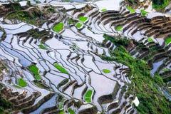 De abstracte textuur van rijstterrassen met hemelbezinning Banaue, Filippijnen Stock Afbeeldingen