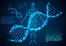 De abstracte van het de mensenlichaam van het wetenschapsconcept digitale verbinding en DNA hallo tec royalty-vrije stock fotografie