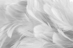 De abstracte Vogel en de kippen als achtergrond bevederen textuur, onduidelijk beeldstijl en zachte kleur van kunstontwerp stock foto