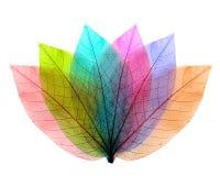 De abstracte vorm van kleurenbladeren Royalty-vrije Stock Afbeelding