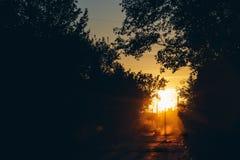 De abstracte zonsondergang van de Avondstad, donkere silhouetten van bomen, schemer in zonlicht Stock Foto