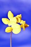 De achtergrond bloeit geel Stock Afbeeldingen