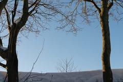 De achtergrond, de bomen en de sneeuw van de de winterscène op hemelachtergrond royalty-vrije stock afbeeldingen